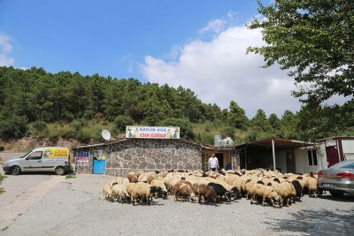 Kadıköy Göztepe Mahallesi Adak Kurban Satış