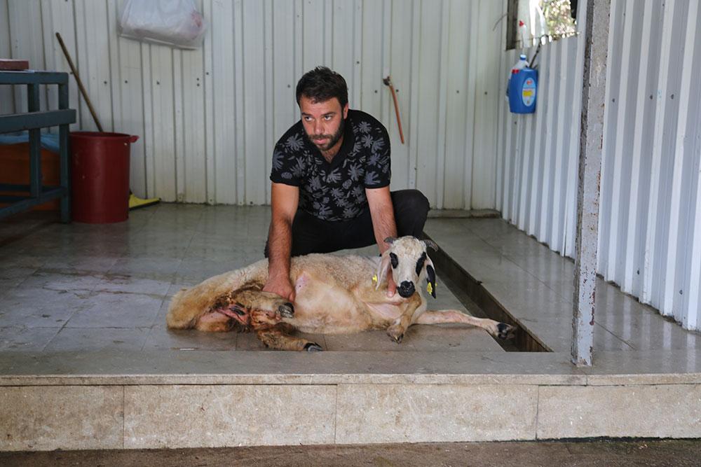 Kadıköy Koşuyolu Mahallesi Adak Kurban