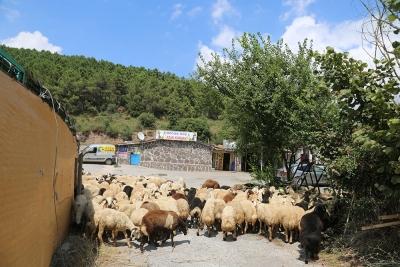 Kadıköy Ondokuzmayıs Mahallesi Adak Kurban Satış Yeri