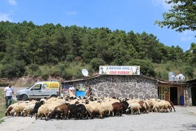 Kadıköy Osmanağa Mahallesi Adak Kurban Satış Yeri