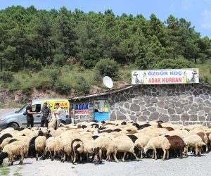 Kadıköy Rasimpaşa Mahallesi Adak Kurban Satış Yeri