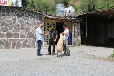 Kadıköy Sahrayıcedit Mahallesi Adak Kurban Satış
