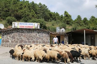 Kadıköy Sahrayıcedit Mahallesi Adak Kurban Satış Yeri