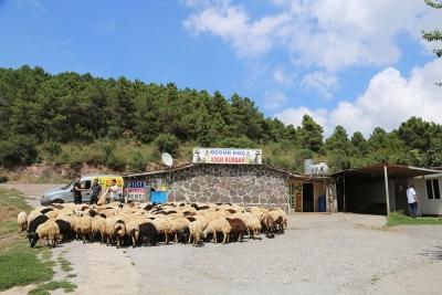 Kadıköy Suadiye Mahallesi Adak Kurban Satış Yeri