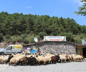 Kartal Karlıktepe Mahallesi Adak Kurban Satış Yeri