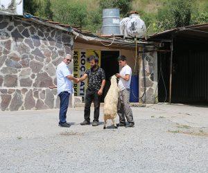 Maltepe Büyükbakkalköy Mahallesi Adak Kurban Satış Yeri