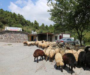 Maltepe Feyzullah Mahallesi Adak Kurban Satış Yeri