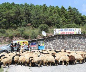 Pendik Ahmetyesevi Mahallesi Adak Kurban Satış Yeri