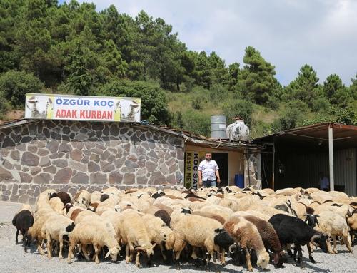 İçerenköy Adak Satış Yerleri