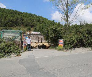 Pendik Fevzi Çakmak Mahallesi Adak Kurban Satış Yeri