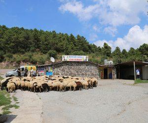 Pendik Orhangazi Mahallesi Adak Kurban Satış Yeri